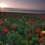 Экскурсионный тур «Гора Большой Богдо – жемчужина Богдинско-Баскунчакского заповедника  + цветение тюльпанов»